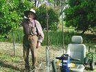 Vince Stenzel checks fruit for ripeness in his famed backyard garden.