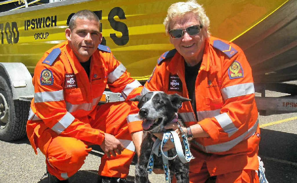 Marburg SES volunteers Shane Eather and Pam Smith with lucky Lucy the cattle dog who they snatched back from death's door after her stranding on a cliff face for weeks.