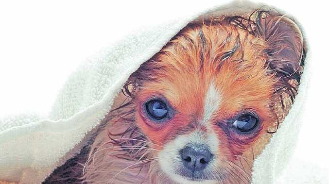 Give your pooch some TLC at the Maraboon Veterinary Surgery charity dog wash tomorrow.