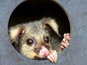 Animals suffer record tick season