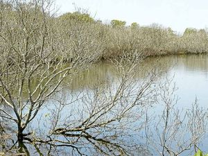 Program shows importance of mangroves