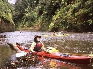 Kayaking the Whanganui River