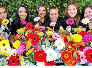 Gerbera girls at war with bullies