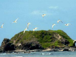 Terns return for breeding season