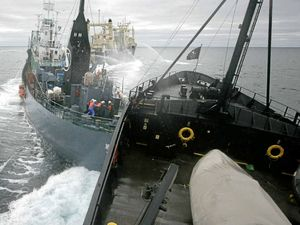 Flights monitor whalers and the Sea Shepherd