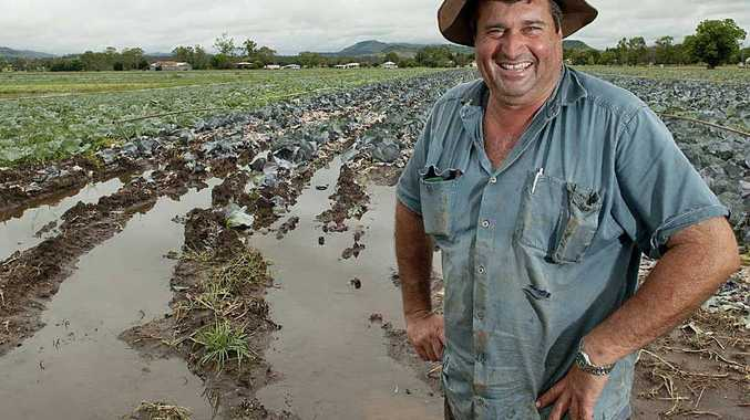 Grantham farmer Derek Schulz surveys his cabbage crop after rain.