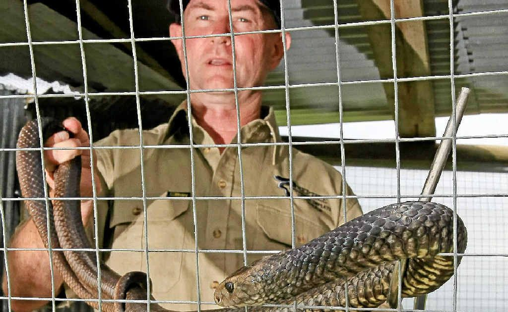 Allan Burnett shows off an eastern brown snake that features in his business Reptile Awareness Displays.