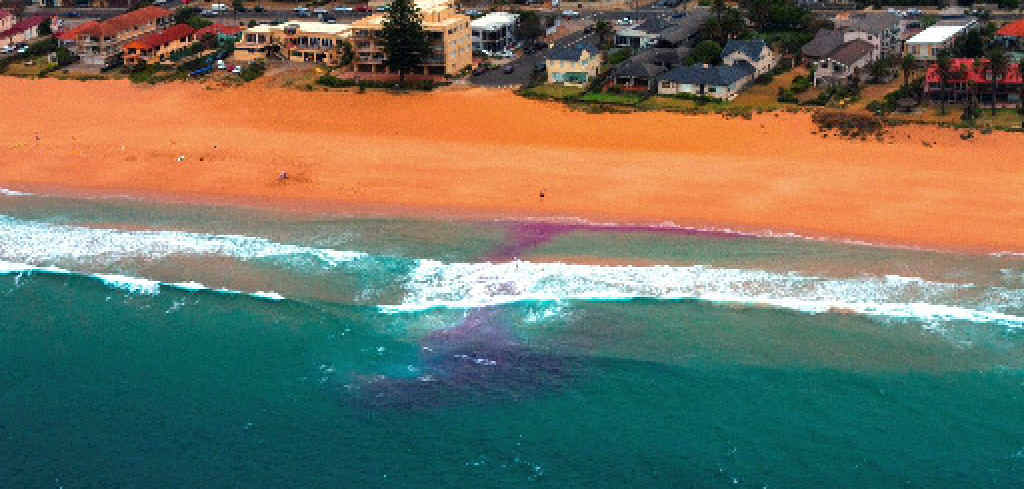 The purple dye test is being used widely across NSW to show swimmers what a rip looks like.
