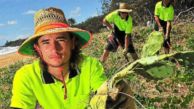 Green Corps student Trent Harper gets to work cleaning up prickly pears from Archie's Beach.