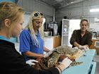 (From left) work experience student Denyelle O'Brien, Australian Seabird Rescue North Coast co-ordinator Kath Southwell and Australian Seabird Rescue veterinarian nurse Michelle Hall tend to a sick hawksbill turtle found in the Richmond River more than a week ago.