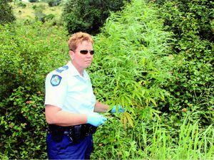 Grandad in cannabis farm bust