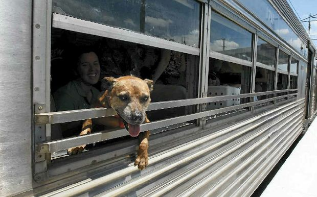 RSPCA pets arrive at Wacol station on their way to the new Animal Care Campus on Sunday, after a trip from Fairfield on the Paws Express train.