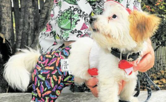 Hat Accessories: Margaret Kelly and Snuggles are showing off a Santa harness and board shorts from Margaret's Pet Coats and Accessories.