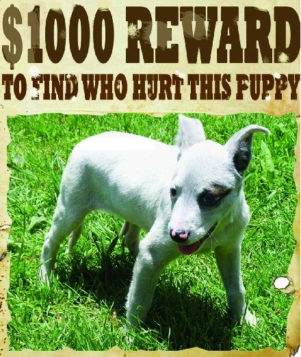 An animal welfare group has offered $1000 for information that leads to the conviction of the person who bashed this puppy and dumped it in a garbage bin.
