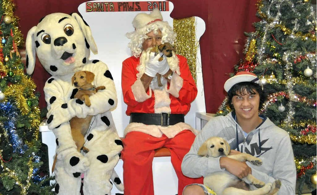 Canines Suki (left), Xena (middle) and Rupert (right), with his owner Aidan, have their photo taken with Santa and Daily Dalmatian.