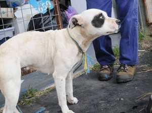 Dog dumped behind RSPCA store