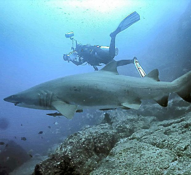Fraser Island Australia: Fraser Helps Grey Nurse Sharks