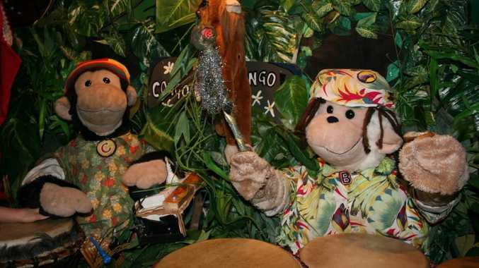 DRUM TIME: The Amazing Drumming Monkeys Congo and Bongo will be performing in Toowoomba on Friday.