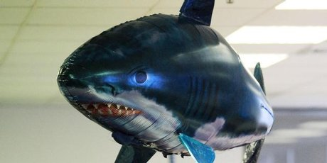 The helium-filled, inflatable sharks were popular Christmas gifts.