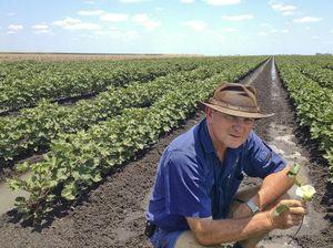 Condamine Alluvium water trading starts for irrigators