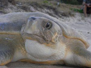 Legislation protects turtles, dugongs