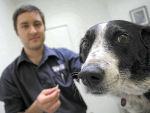 Parvovirus spike hits dogs