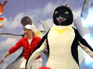 Penguins dance in Tweed