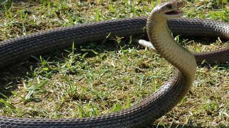 A brown snake. Just back away from these blighters.