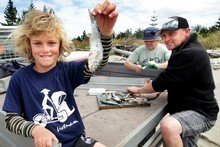 Conor White, 10, shows off a bait-fish he caught at Tolaga Bay while his dad, Mike (right) and Geoff Meade prepare a longline.