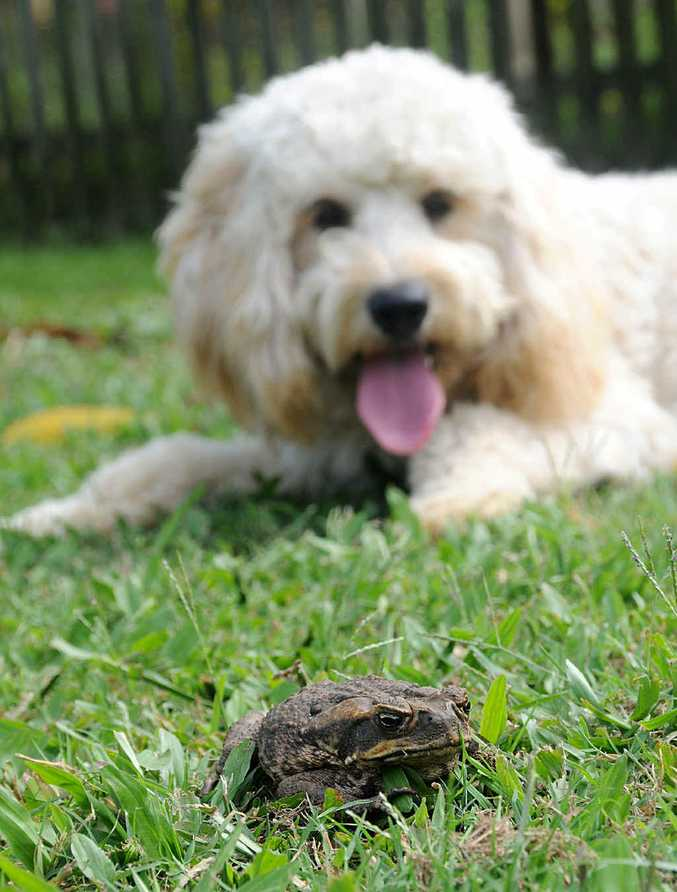 Canetoads are on the march thanks to the warmer weather and pet owners are being urged to be careful.
