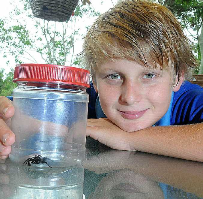 Jarred Hulme checks out the eastern mouse spider that his grandparents found in their Calico Ck house.