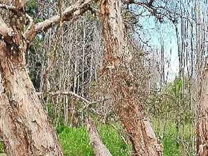 Lake tree's death shock
