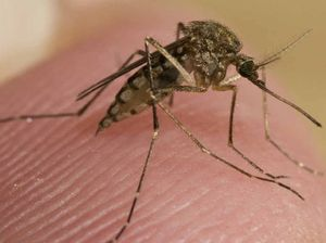 Zika virus vaccine may take 'several years'