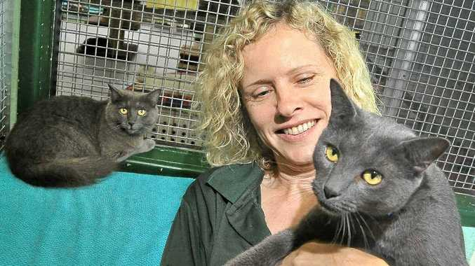 Angie Anderson from Sippy Creek Animal Refuge with cats Huey and Duette, that were surrendered together because their owners could not find a rental that would allow pets.