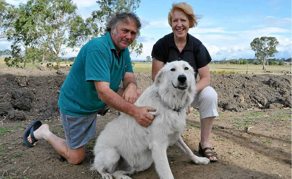 Gerard and Lynda Hemmings, pictured with dog Plod, are finally able to continue with their plans to get their Hamilton St home raised above flood level.