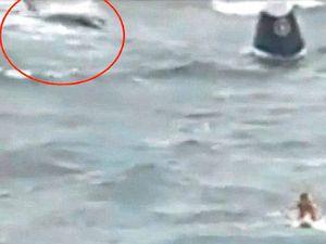 'Shark' clip raises debate