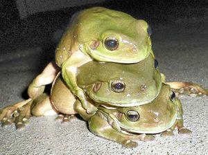 Amorous amphibians jump to it