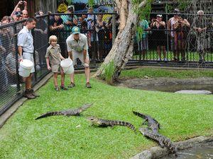 Robert Irwin feeds the alligators