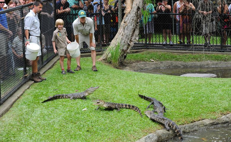 ROBERT Irwin feeds alligators for the first time at Australia Zoo