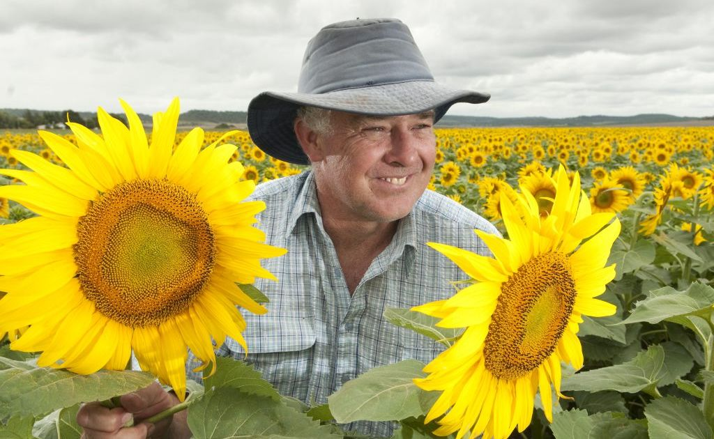 Peter Free's sunflower and sorghum farm in Felton will now be protected under the new State Government strategic land cropping act.