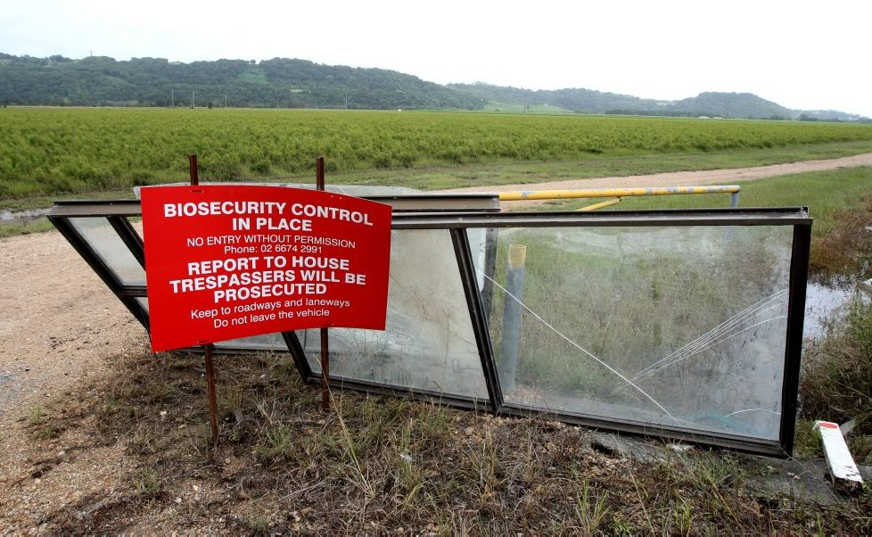 A Chinderah tea-tree farm is still a biosecurity risk one year on.