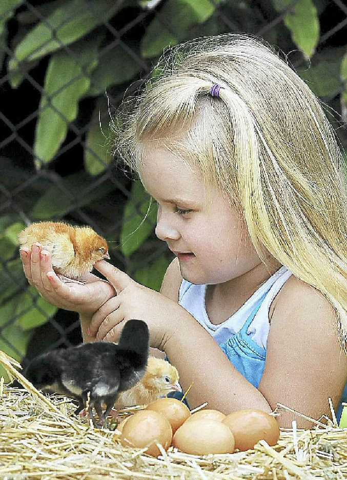 Georgia Sheridan of South Lismore with day-old chicks.