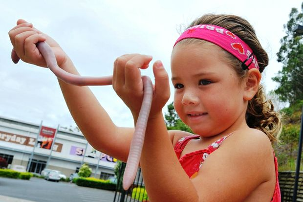 Charlize Morrison holds the massive earthworm dubbed the 'wonder from down under.'