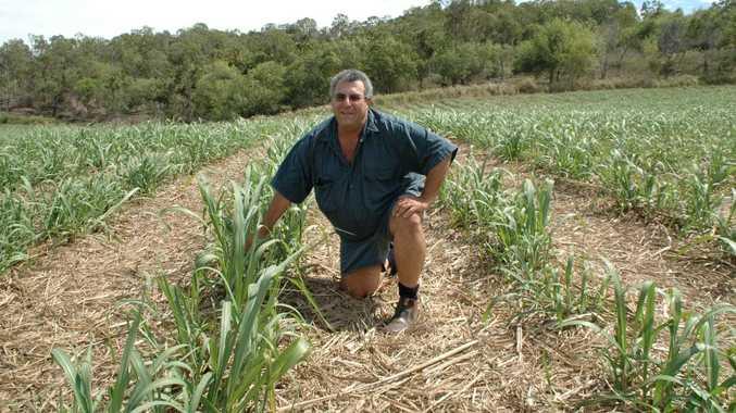 Mackay Canegrowers chairman Paul Schembri.