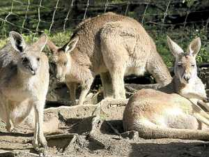 Attack roo destroyed