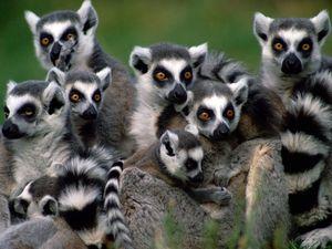 Explore Madagascar's wilderness