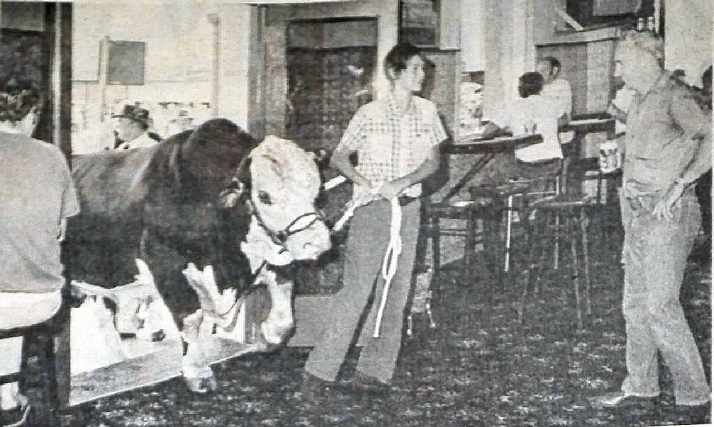 A young lad takes a bull into the bar of the Commercial Hotel during the inaugural Beef Week in 1982.