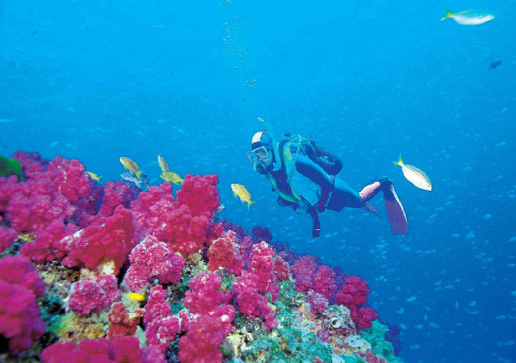 Minister Burke says marine park plans would give certainty to operators working in areas such as the Coral Sea.