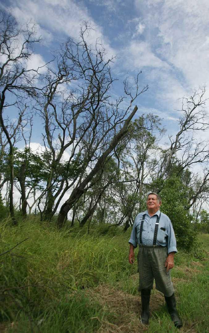 Trevor Dwyer wonders what has killed these trees on Ridgelands Rd.