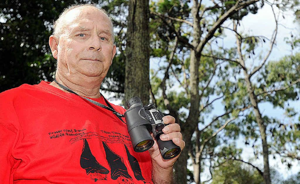 Hervey Bay Environmentalist John Parsons keeps an eye on the flying foxes.